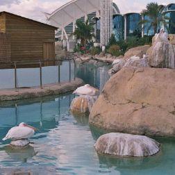 oceanarium-012_60075648_o