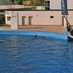 oceanarium-dolphins-001_60075782_o