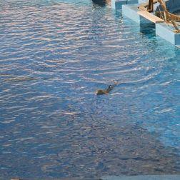 oceanarium-dolphins-002_60075802_o