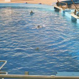 oceanarium-dolphins-005_60075880_o