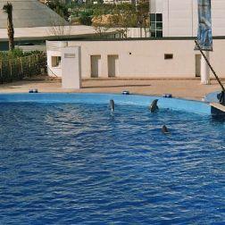 oceanarium-dolphins-006_60075910_o