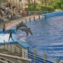 oceanarium-dolphins-007_60075950_o