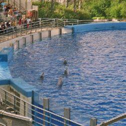 oceanarium-dolphins-008_60075998_o