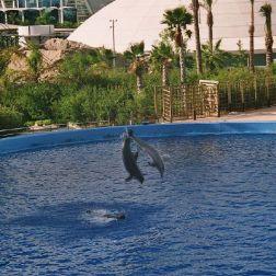 oceanarium-dolphins-009_60076037_o