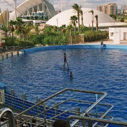 oceanarium-dolphins-010_60076075_o