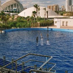 oceanarium-dolphins-011_60076099_o