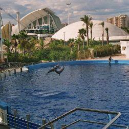 oceanarium-dolphins-012_60076139_o