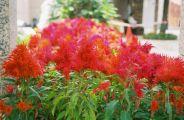 penha-hill-gardens-002_60984316_o