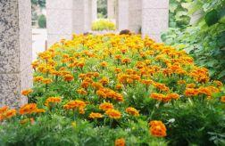 penha-hill-gardens-003_60984345_o