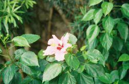 penha-hill-gardens-006_60984426_o