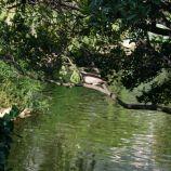 rose-garden-monte-carlo-003_5092821034_o