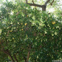 rose-garden-monte-carlo-010_5092822744_o