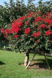 rose-garden-monte-carlo-019_5092227935_o