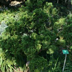 rose-garden-monte-carlo-021_5092228557_o