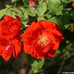 rose-garden-monte-carlo-022_5092825510_o
