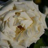 rose-garden-monte-carlo-023_5092825602_o