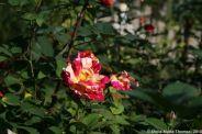 rose-garden-monte-carlo-025_5092825904_o