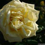 rose-garden-monte-carlo-029_5092229881_o