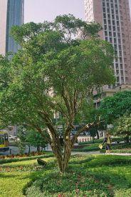 sao-francisco-gardens-004_66575423_o