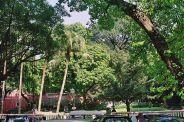 sao-francisco-gardens-005_66575443_o