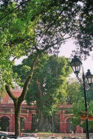 sao-francisco-gardens-007_66575504_o
