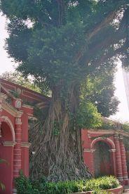 sao-francisco-gardens-008_66575516_o