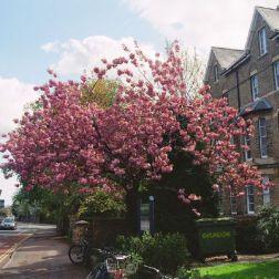spring-flowers-oxford-001_140456068_o