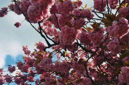 spring-flowers-oxford-002_140456089_o