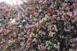 spring-flowers-oxford-003_140456129_o