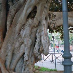 tree-plaza-de-reina-001_60073872_o