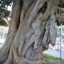 tree-plaza-de-reina-002_60073889_o