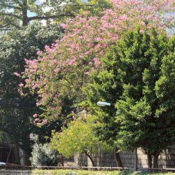 trees-at-hospital-hill-001_2048527891_o