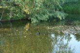 zaltbommel-netherlands-011_482329705_o
