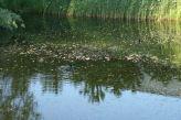 zaltbommel-netherlands-015_482329839_o