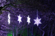 BLENHEIM PALACE CHRISTMAS TRAIL 2017 042