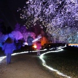 BLENHEIM PALACE CHRISTMAS TRAIL 2017 074