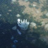jellyfish-001_1715416025_o