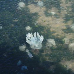 jellyfish-002_1716264312_o