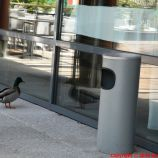 HOTEL PARC BEAUMONT, PAU, DUCK 002