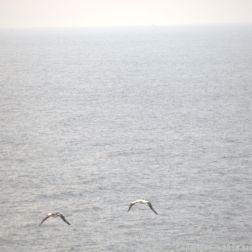 LOOKING FOR DOLPHINS, CAP FINISTERRE 002
