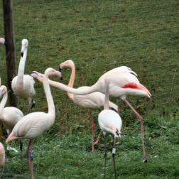 marwell-zoological-park---flamingoes-002_3075676600_o