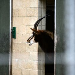 marwell-zoological-park---gazelle-001_3075679246_o