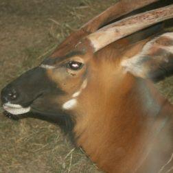 marwell-zoological-park---gazelle-002_3074844799_o