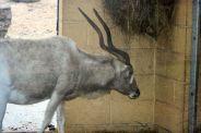 marwell-zoological-park---gazelle-00a_3074845013_o