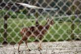 marwell-zoological-park---kudu-001_3074846071_o