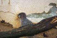 marwell-zoological-park---meerkats-007_3075706680_o