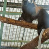 marwell-zoological-park---monkeys-001_3075688182_o