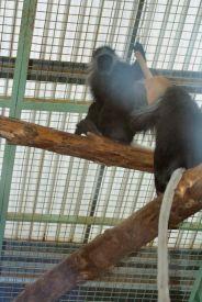marwell-zoological-park---monkeys-001_3075688182_o