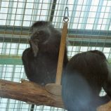 marwell-zoological-park---monkeys-002_3075688376_o