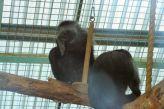 marwell-zoological-park---monkeys-002_3075688376_o